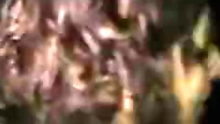 Gloryhole Swallow Cougar Blake
